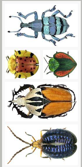 Beautiful beetles