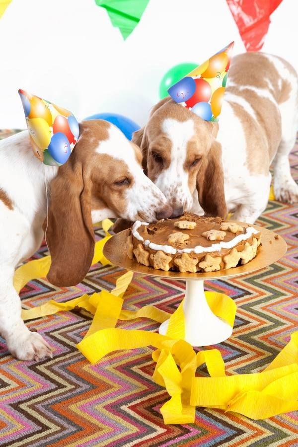 In Adorable Dog Birthday Cake Ideas Kannst Du Deinem Haustier Ein