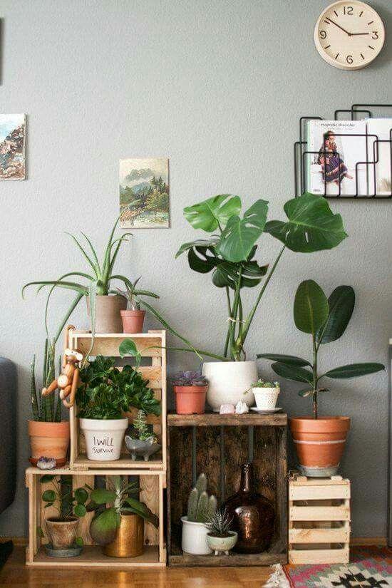 Plantes et caisses