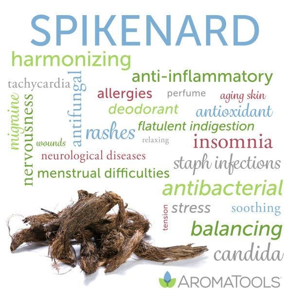 Essential Oil Spotlight: Spikenard | AromaTools™ Blog