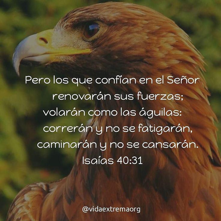 Pero los que confían en el Señor renovarán sus fuerzas; volarán como las águilas: correrán y no se fatigarán caminarán y no se cansarán. Isaías 40:31 #Iglesia #DiosSobrenatural #Biblia #SagradasEscrituras Imágenes cristianas gratis
