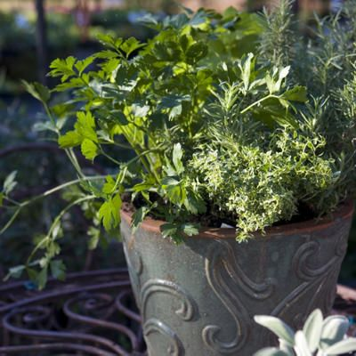Coriander, Rosemary, and Thyme Garden - Spectacular Container Gardening Ideas - Southern Living (side porch)