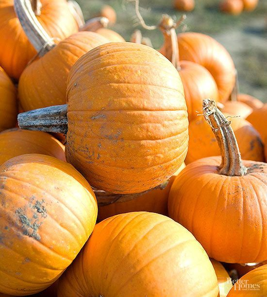 Skip the pumpkin farm and grow your own patch at home.