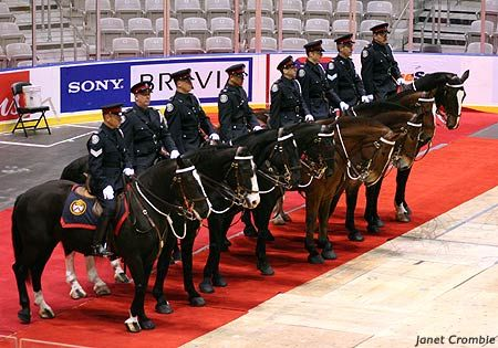 Toronto Mounted Police horses attending a Memorial for Brigadier 2006