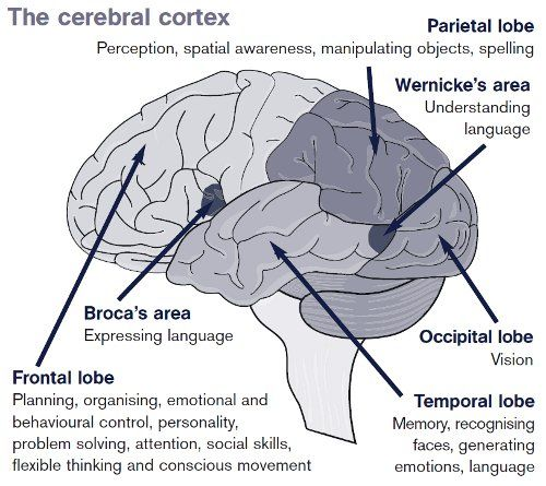The diagram shows which areas of your brain control different activities.  Damage to a particular area can affect that activity.