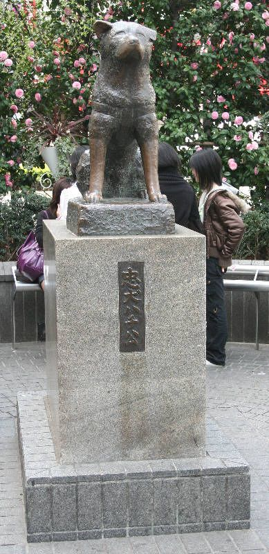 Shibuya Train Station in Japan - Statue of Hachi an Akita who went to the train station every day for 10 years after his owner died.