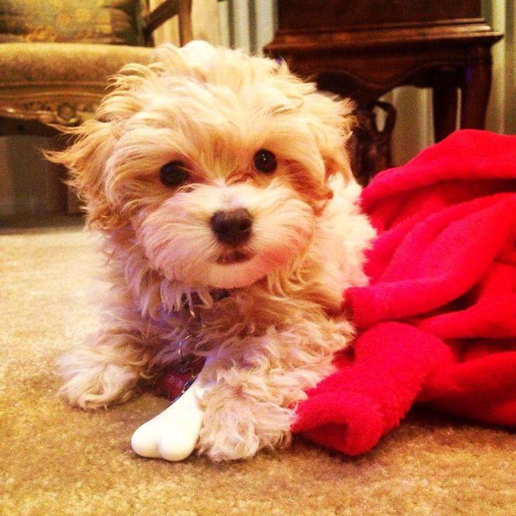 Apartment Dogs: 17 Best Images About Puppy Apartment Reviews On Pinterest
