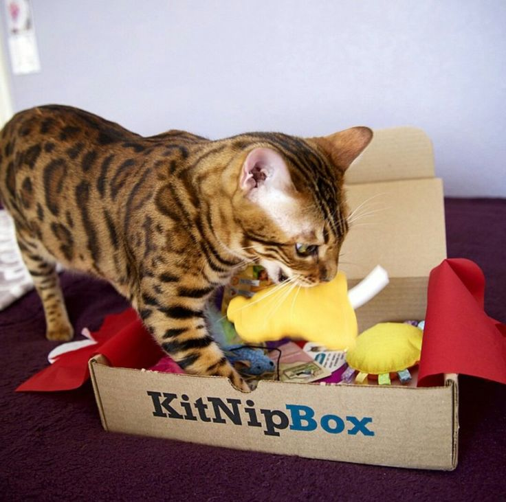 Cat Subscription Boxes and like OMG! get some yourself some pawtastic adorable cat apparel!