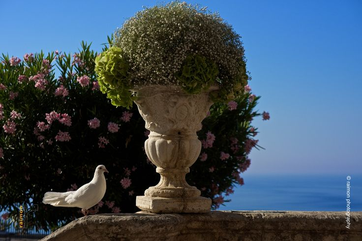 White pigeon  in Taormina, Sicily.