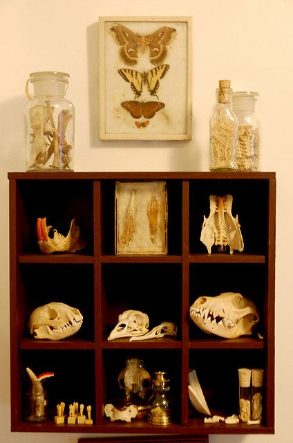 The little cubby hole idea is adorable! I need a bone shelf!