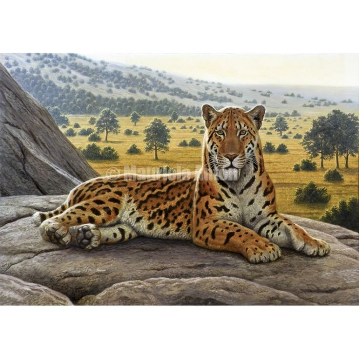 Jaguar Felis Onca: 558 Best Ideas About SaberTooth Cats On Pinterest