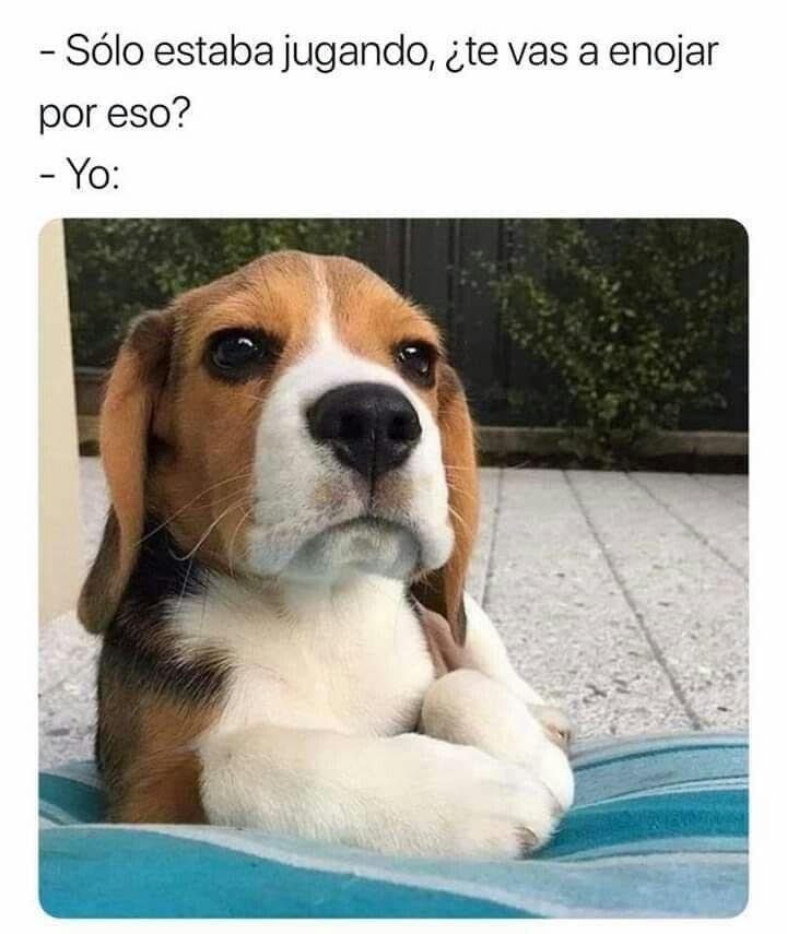 Pin De Sindy Perez En Memes De Pareja Raza De Perro Beagle Cachorros Graciosos Perros Arrugados