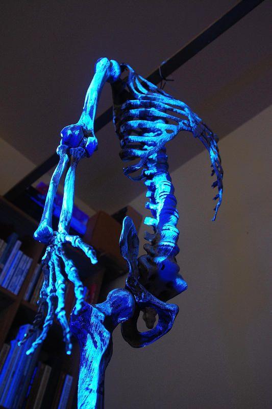 Halloween Asylum Coupon