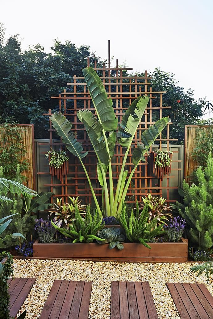 A traveller's palm provides vertical drama in this tight space, bookended by the octopus-like forms of Myers asparagus ferns. Bamboo screening panels were framed with lengths of recycled timber. | Photo: Scott Hawkins | Story: Australian House & Garden