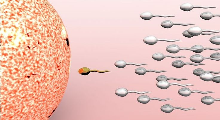 Body Cells Transfer Genetic Info Directly Into Sperm Cells, Amazing Study Finds