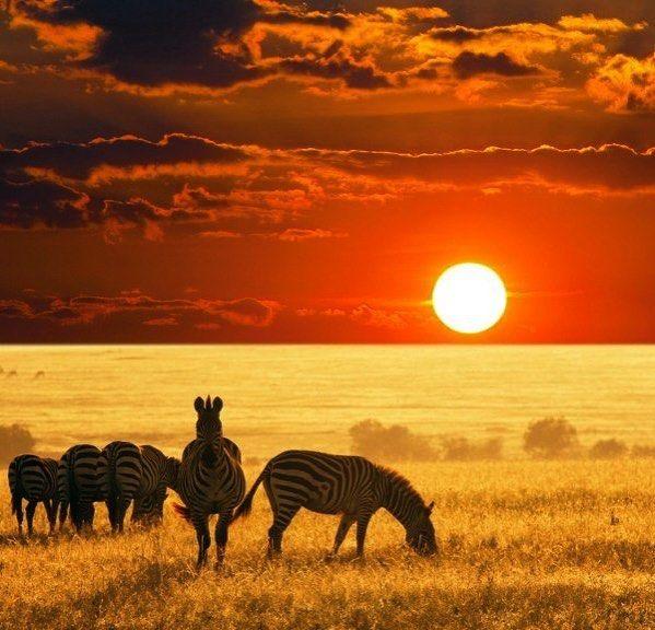 """#DatoAmarillo: Existe un concepto denominado """"la hora mágica"""" la cual transcurre durante el amanecer antes de que salga el sol y durante el atardecer entre la puesta de sol y la llegada de la noche. Estos momentos son los preferidos por los artistas audiovisuales para sacar fotos o grabar videos.  Aprovecha las horas mágicas del día para recargarte de energía y disfrutar de los beneficios del sol en tu hogar.  #solarenergy #nature #lights #magichour #amulensolar"""