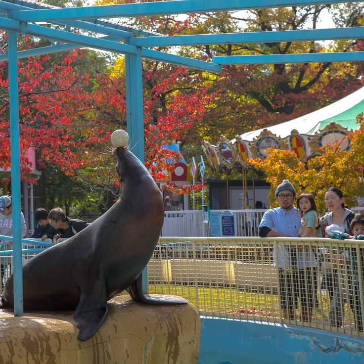 Fresh You can see this skillful boy in Jyoyama zoo in Nagano without paying free
