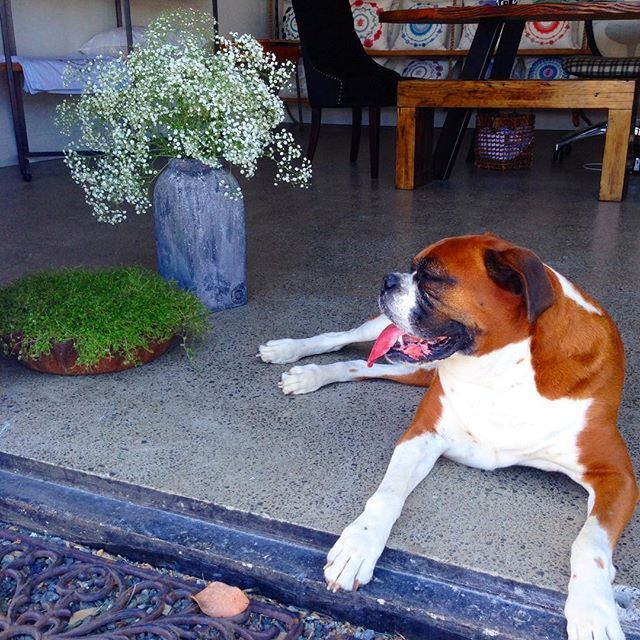 Beaut day! Nice and cool at Studio Black. Mercs is loving the cold concrete ☀️ #boxer #studioblack #pudgedesign #loubrowndesign
