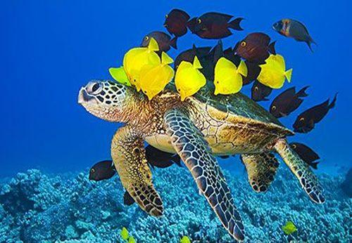 Tortuga marina con peces amarillos