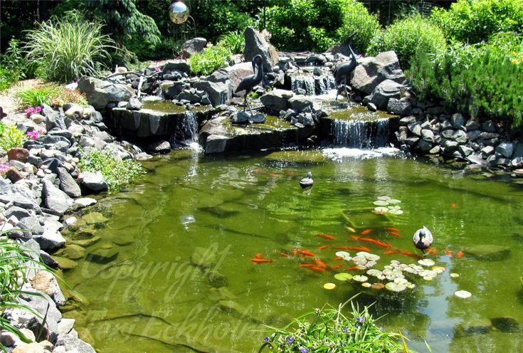 1000 images about ponds in a garden on pinterest for Koi pond builders mn