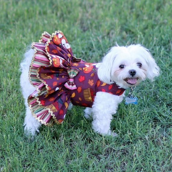 Dog Dress For The Thanksgiving Holiday Custom Made For Fall