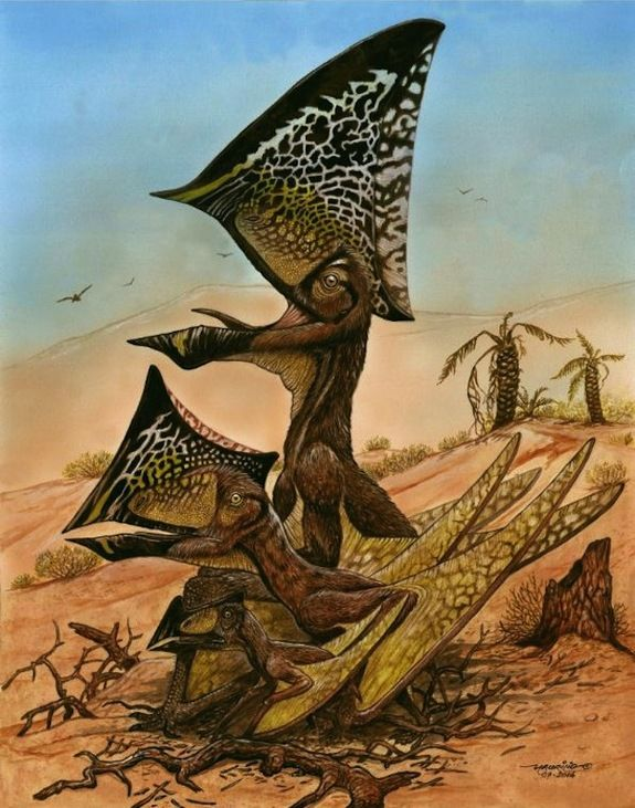 An ancient flying reptile with a bizarre, butterfly-like head has been unearthed in Brazil. The newfound reptile species, Caiuajara dobruskii, lived about 80 million years ago in an ancient desert oasis. The beast sported a strange bony crest on its head that looked like the wings of a butterfly, and had the wingspan needed to take flight at a very young age.