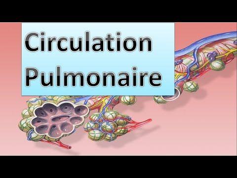 Biologie | Cours de circulation pulmonaire