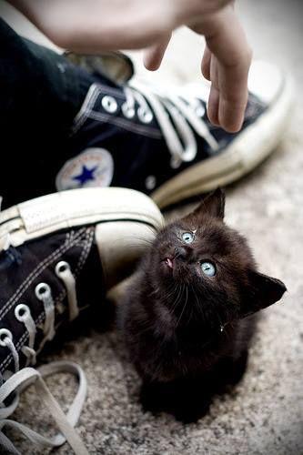 Sexta-feira 13. Azar é não ter o amor de um gato preto.