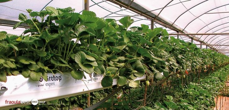 The future of greenhouse products
