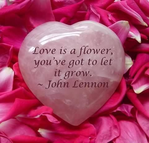 Love is a flower, you've got to let it grow...John Lennon life quotes quote wise quote inspirational quote song lyrics inspiring quote attitude quotes wisdom quotes better person quote