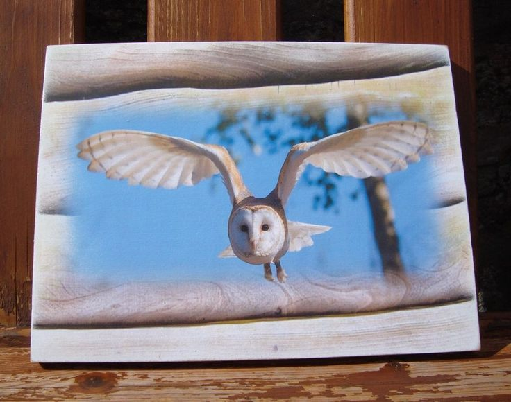Owl photo, barn owl, birds, gift for him, grandad, dad, uncle - HANDMADE plaque