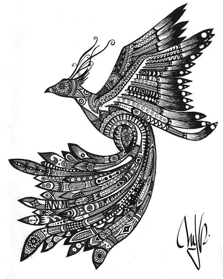 """Fénix"" Zentangle bird Hand drawn  @mjrart bird - drawing - feather - feathers - pluma - black and white - flying - fly - tattoo - sticker - imagination - inspiration"