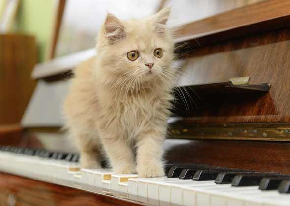 Most popular kitten names of 2014