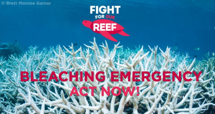 Our Reef is in crisis. Help rescue Our Reef and #StopAdani now >>