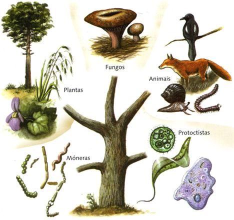 2.2.4 Clasificación dos seres vivos: os cinco reinos | Estatística. A materia viva e os seres vivos