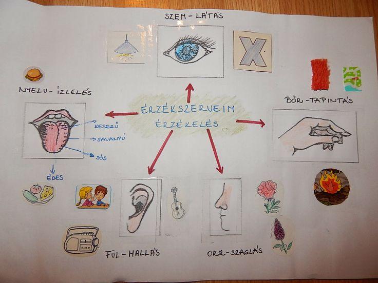 2. osztályos környezethez- Apáczais tanmenet alapján- Érzékszervek - Marci fejlesztő és kreatív oldala