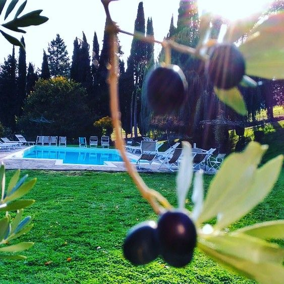 Looking for a magical place in #Tuscany?   #villacampestri #oliveoilresort #experience #oliveoil #mugello #tuscany  #takemethere #stayandwonder