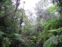 En las entrañas del bosque del Yunque. Aspecto de la conformación del bosque siempre verde