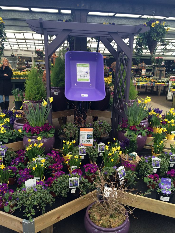 Early Spring Colour at Fairways Garden Centre