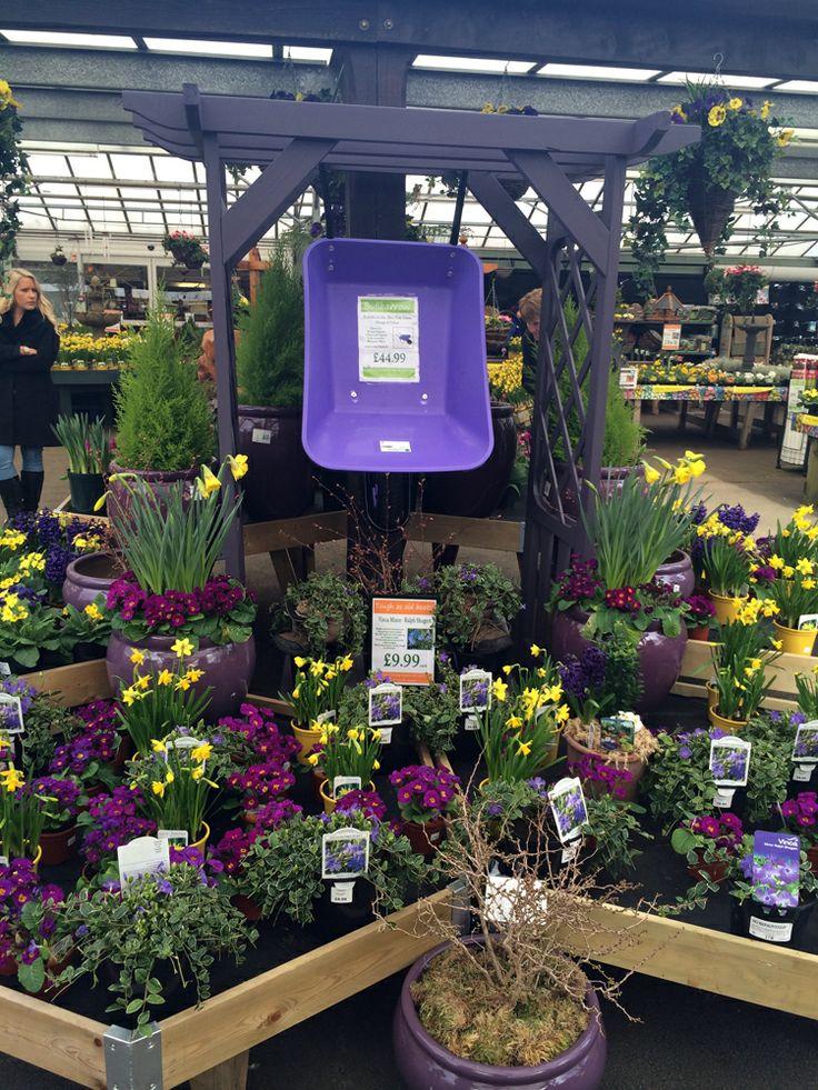 Early Spring Colour at Fairways Garden Centre