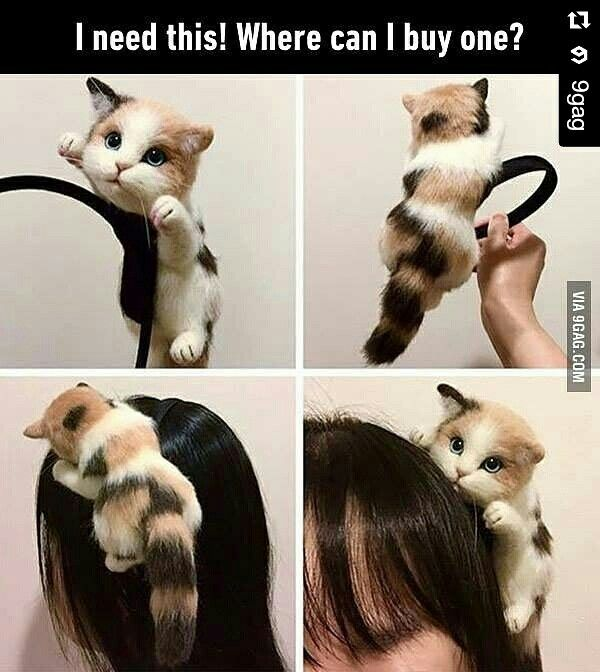 Headband for a Crazy Cat Lady @9gag