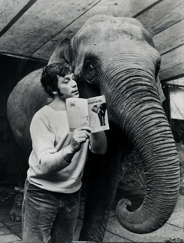'You Don't Share A Hotel with Oliver Reed': Michael Winner Takes Two Elephants to Switzerland