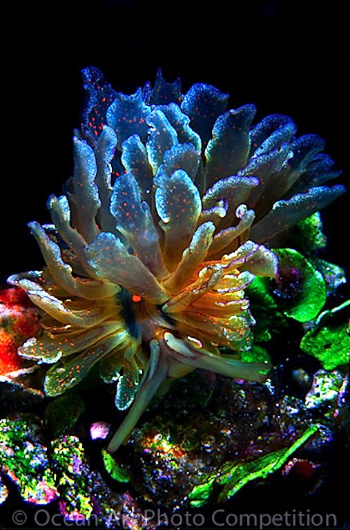 """Cyerce Sea Slug... how can you see this and believe that God doesn't exist? To me, that takes more """"faith"""" than just accepting that He does!"""