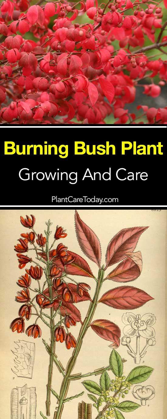 25 Unique Burning Bush Craft Ideas On Pinterest