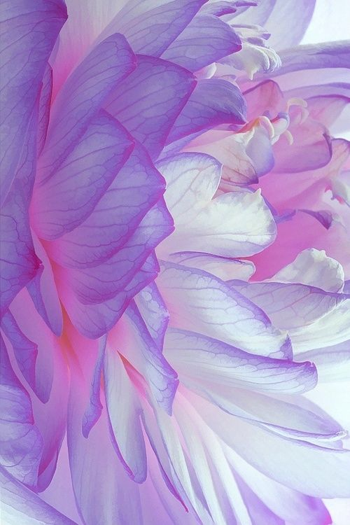 Colors | Lavender by ana marissa
