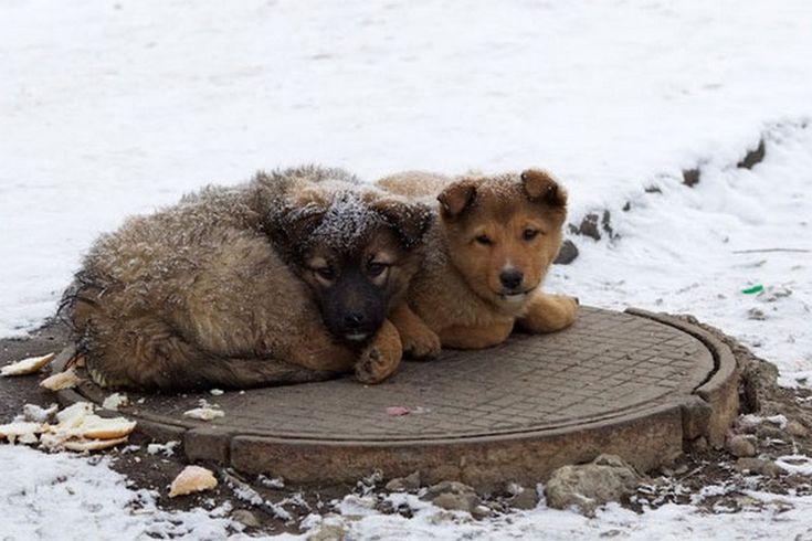Верховный суд России вынес смертный приговор всем бездомным животным