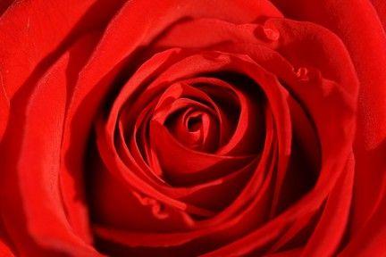 l significato della rosa di colore rosa è simbolo dell'unione ( rosso più bianco) che produce equilibrio ed armonia, di una situazione positiva in cui vengono prese in considerazione tutte le parti e tutte le alternative, ed in cui prevale serenità e fiducia