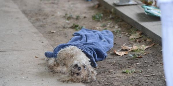 more signatures please !!!!!  Seek Justice for dog who dies after being tossed down Brooklyn trash chute by owner
