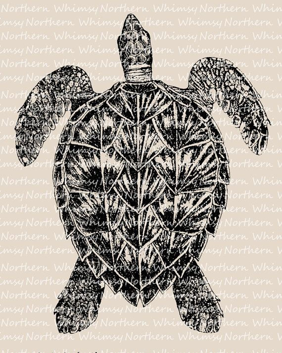 Sea Turtle Clip Art – Beach Clip Art – Turtle Illustration – Vintage Turtle Image - Ocean Clipart – Digital Stamp - commercial use