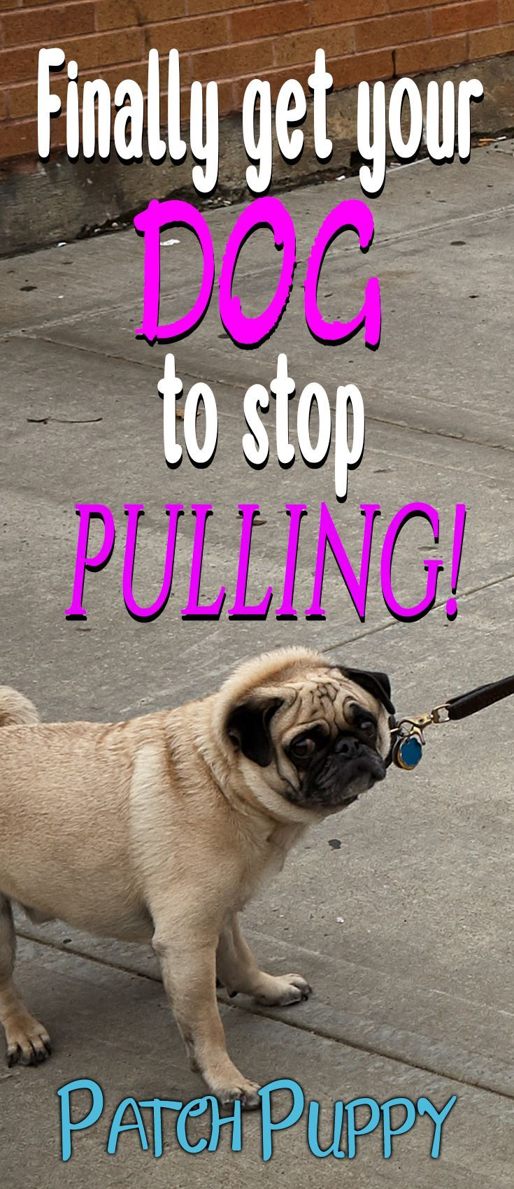 Finally Get Your Dog To Stop Pulling How To Stop Leash Pulling